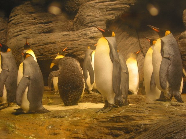 pinguins-1405400